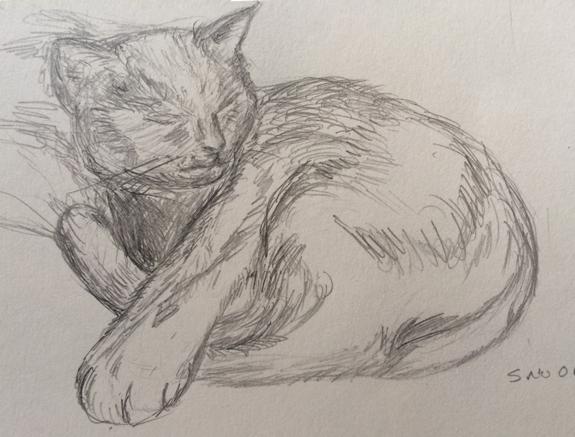 studio-cat-web