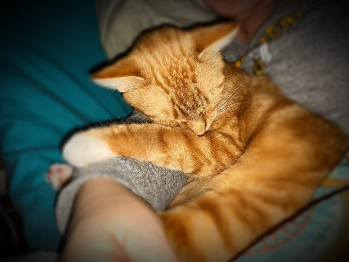 Orange Tabby Therapy.