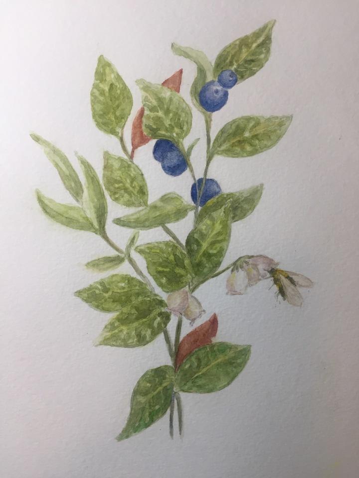 Blueberries, Honey