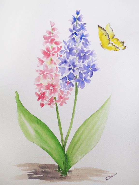 Hyacinth-web